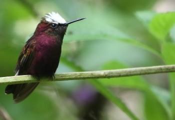Quetzales, colibríes y tortugas
