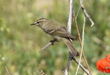 Bird paradise of Central Asia