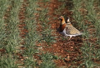 Top birding regions in Spain