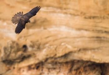 Especial halcones de Eleonora I