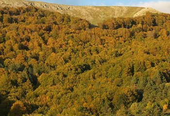 Bosque de Quinto Real y foces navarras