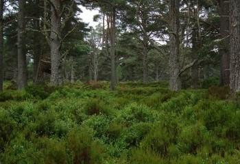 Foto de Abernethy Forest