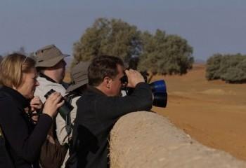 Foto de Observando gorriones saharianos