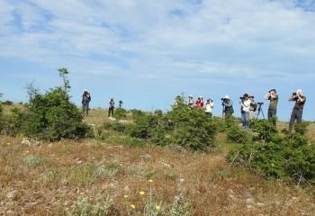 Foto de Grupo observando el zarcero lánguido