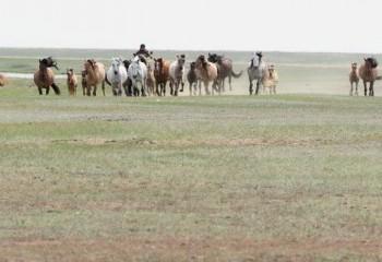 Foto de Caballos en la estepa kazaja