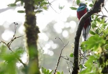 Foto de Quetzal guatemalteco