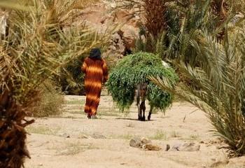 Foto de Marruecos 2012