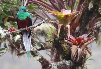 Foto de Costa Rica 2018: Quetzal guatemalteco