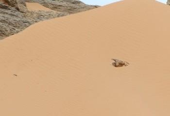 Foto de Marruecos 2018: Buho desértico