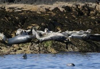 Foto de Grey Seals