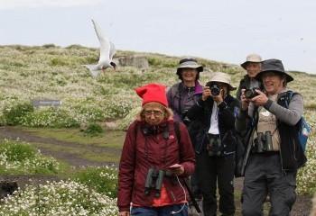 Foto de Arctic Terns attack!