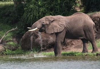 Foto de Elefante en Kazinga