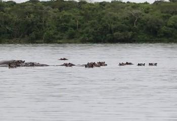 Foto de Hippos