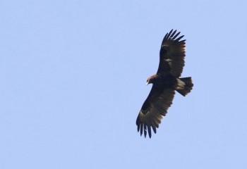 Foto de India 2019: Águila india