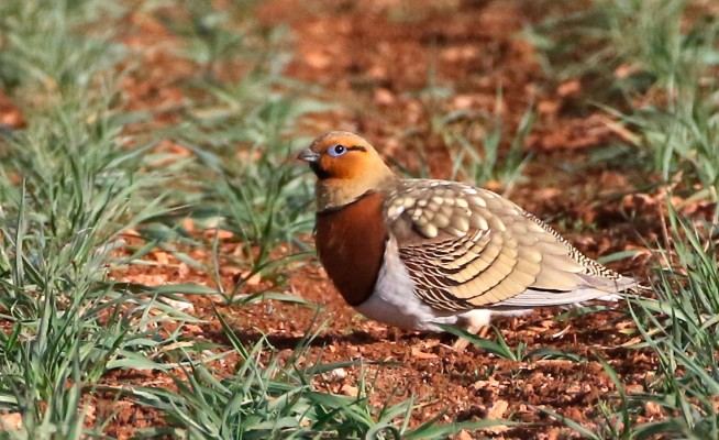 top birding regions in spain Tour